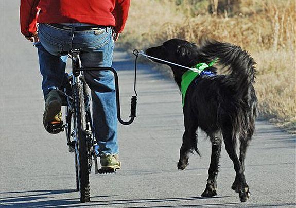 Bolsa Para Levar Cachorro Na Bicicleta : Eu vou de bike bicicletas lazer e transporte urbano